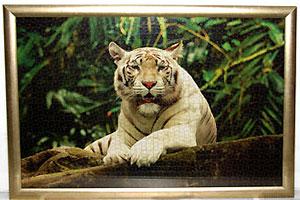 Пазл белый тигр